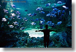 animals, aquarium, australia, fish, horizontal, men, silhouettes, structures, sydney, taronga zoo, photograph