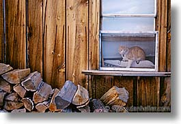 bodie, california, cats, exteriors, ghost town, horizontal, state park, west coast, western usa, photograph