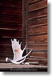 antiques, antlers, bodie, california, ghost town, vertical, west coast, western usa, photograph