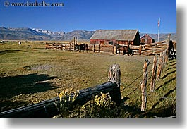 barn, bridgeport, california, horizontal, horses, mountains, ranch, west coast, western usa, photograph