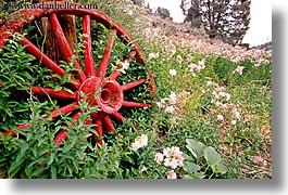 bridgeport, california, coach, flowers, horizontal, stage, west coast, western usa, wheels, photograph