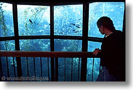 aquarium, cal coast, california, california coast, horizontal, jills, monterey, west coast, western usa, photograph