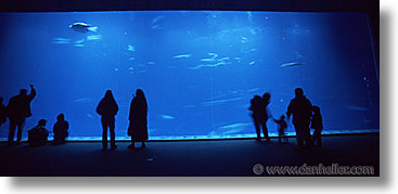 aquarium, cal coast, california, california coast, horizontal, monterey, panoramic, people, west coast, western usa, photograph