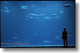 aquarium, cal coast, california, california coast, horizontal, monterey, people, west coast, western usa, photograph