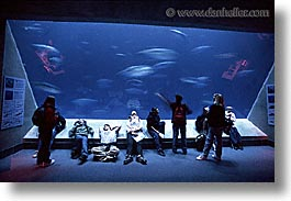 aquarium, cal coast, california, california coast, horizontal, monterey, students, west coast, western usa, photograph