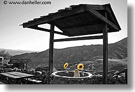 calico, california, horizontal, sunflowers, wells, west coast, western usa, photograph