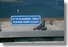 california, capitola, horizontal, pigeons, signs, west coast, western usa, wharf, photograph