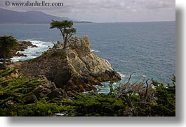 california, carmel, cypress, horizontal, lone, trees, west coast, western usa, photograph