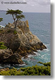 california, carmel, cypress, lone, trees, vertical, west coast, western usa, photograph