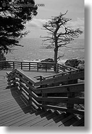 black and white, california, carmel, cypress, lone, stairs, trees, vertical, west coast, western usa, photograph