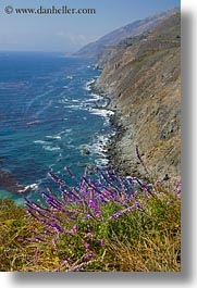 california, cliffs, coastal views, coastline, flowers, vertical, west coast, western usa, photograph