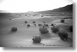 black and white, california, death valley, desert, dunes, horizontal, national parks, west coast, western usa, photograph