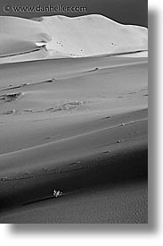 black and white, california, death valley, eureka, eureka dunes, flowers, national parks, vertical, west coast, western usa, photograph