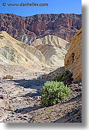 bushes, california, canyons, death valley, golden, golden canyon, national parks, vertical, west coast, western usa, photograph