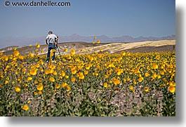 california, death valley, horizontal, national parks, people, west coast, western usa, wildflowers, photograph