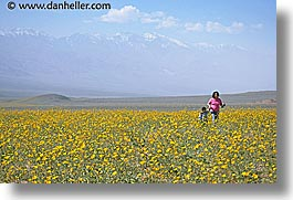 boys, california, childrens, death valley, horizontal, landscapes, mothers, national parks, people, west coast, western usa, wildflowers, womens, photograph