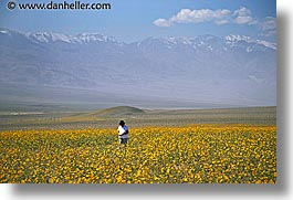 california, death valley, horizontal, landscapes, national parks, people, west coast, western usa, wildflowers, photograph