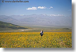 california, death valley, horizontal, jack and jill, landscapes, national parks, people, west coast, western usa, wildflowers, photograph