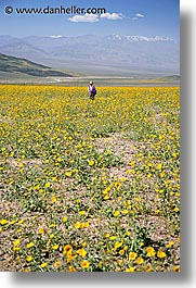 california, death valley, jack and jill, landscapes, national parks, people, vertical, west coast, western usa, wildflowers, photograph
