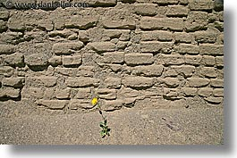 bricks, california, death valley, flowers, horizontal, national parks, west coast, western usa, wildflowers, photograph