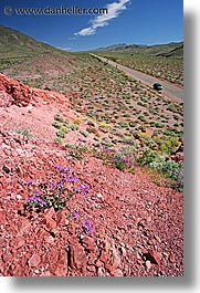 california, death valley, landscapes, national parks, vertical, west coast, western usa, wildflowers, photograph