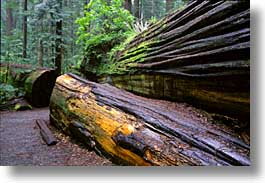 california, forests, horizontal, humboldt, redwoods, trees, west coast, western usa, woods, photograph