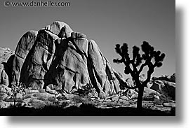 black and white, california, horizontal, joshua, joshua tree, rocks, west coast, western usa, photograph