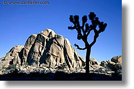 california, horizontal, joshua, joshua tree, rocks, west coast, western usa, photograph