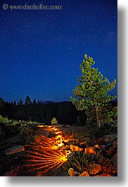 california, illuminated, kings canyon, long exposure, nite, paths, stars, trees, vertical, west coast, western usa, photograph