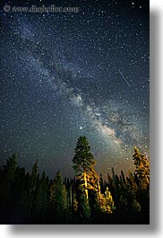 california, galaxy, kings canyon, long exposure, milky way, nite, stars, trees, vertical, west coast, western usa, photograph