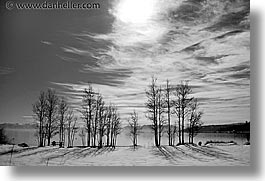 bare, black and white, california, horizontal, lake tahoe, lakes, scenics, snow, trees, west coast, western usa, photograph