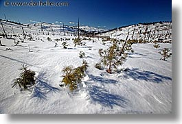 california, horizontal, lake tahoe, pines, scenics, snow, west coast, western usa, photograph