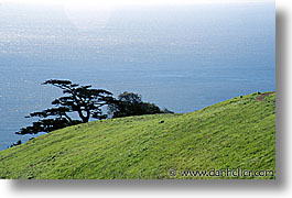 california, headlands, horizontal, marin, marin county, marin headlands, monterey, monterey pine, north bay, northern california, pines, san francisco bay area, west coast, western usa, photograph