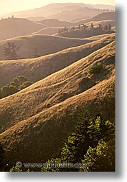 california, headlands, marin, marin county, marin headlands, north bay, northern california, san francisco bay area, tam, vertical, west coast, western usa, photograph