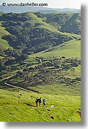 california, dogs, hikers, hills, lucas valley, marin, marin county, north bay, northern california, san francisco bay area, vertical, west coast, western usa, photograph