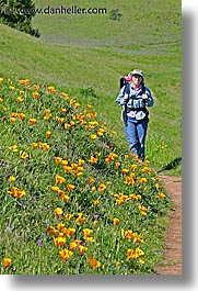 california, jills, lucas valley, marin, marin county, north bay, northern california, poppies, san francisco bay area, vertical, west coast, western usa, photograph