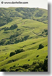 california, hills, lucas, lucas valley, marin, marin county, north bay, northern california, san francisco bay area, valley, vertical, west coast, western usa, photograph