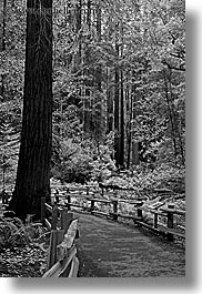 black and white, california, forests, long exposure, marin, marin county, muir woods, nature, north bay, northern california, paths, paved, plants, trees, vertical, west coast, western usa, photograph