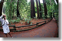 artists, california, cameras, colors, forests, green, horizontal, jills, lush, marin, marin county, muir woods, nature, north bay, northern california, paths, people, photographers, photographing, plants, trees, west coast, western usa, womens, photograph