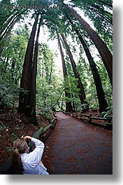 artists, california, cameras, colors, forests, green, jills, lush, marin, marin county, muir woods, nature, north bay, northern california, paths, people, photographers, photographing, plants, trees, vertical, west coast, western usa, womens, photograph