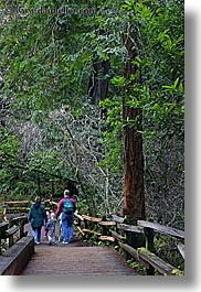 california, colors, families, forests, green, lush, marin, marin county, muir woods, nature, north bay, northern california, paths, paved, people, plants, slow exposure, trees, vertical, west coast, western usa, photograph