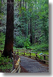 california, colors, forests, green, long exposure, lush, marin, marin county, muir woods, nature, north bay, northern california, paths, paved, plants, trees, vertical, west coast, western usa, photograph