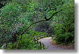 california, colors, forests, green, horizontal, lush, marin, marin county, muir woods, nature, north bay, northern california, paths, paved, plants, slow exposure, trees, west coast, western usa, photograph
