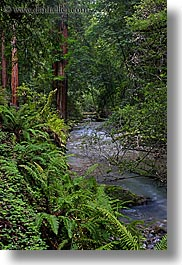 california, colors, forests, green, long exposure, lush, marin, marin county, muir woods, nature, north bay, northern california, plants, redwoods, rivers, trees, vertical, west coast, western usa, photograph