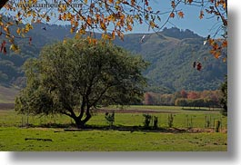 california, fall foliage, foliage, green, horizontal, landscapes, leaves, marin, marin county, nature, north bay, northern california, novato, scenics, stafford lake park, west coast, western usa, photograph