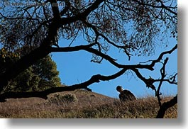 branches, california, horizontal, jills, landscapes, marin, marin county, nature, north bay, northern california, novato, people, scenics, stafford lake park, trees, west coast, western usa, womens, photograph