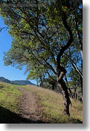 california, landscapes, marin, marin county, nature, north bay, northern california, novato, paths, scenics, stafford lake park, trees, vertical, west coast, western usa, photograph