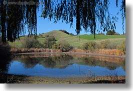 branches, california, hills, horizontal, landscapes, marin, marin county, nature, north bay, northern california, novato, pond, scenics, stafford lake park, water, west coast, western usa, photograph