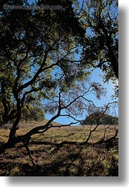 california, landscapes, marin, marin county, nature, north bay, northern california, novato, scenics, shadows, stafford lake park, sun, trees, vertical, west coast, western usa, photograph