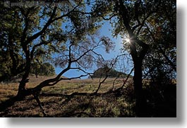 california, horizontal, landscapes, marin, marin county, nature, north bay, northern california, novato, scenics, shadows, stafford lake park, sun, trees, west coast, western usa, photograph
